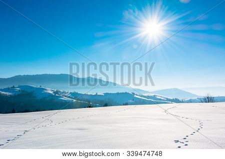 Mountainous Countryside In Wintertime. Trees On Snow Covered Hills And Meadows. Wonderful Weather On