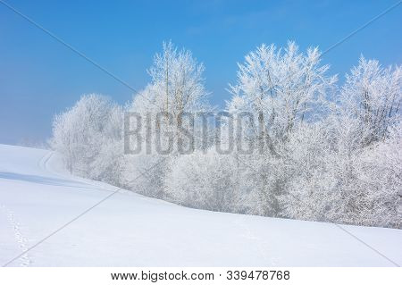 Forest In Hoarfrost On Snow Covered Hill. Sunny Morning Landscape. Misty Weather With Blue Sky. Wint