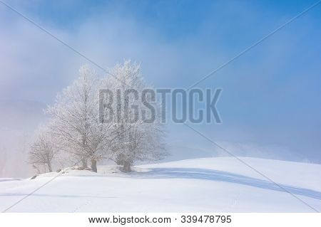 Bunch Of Trees In Hoarfrost On Snow Covered Hill. Sunny Morning Landscape. Foggy Weather With Blue S