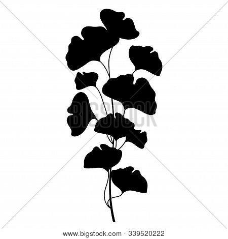 Vector Branch Silhouette Of Gingko Or Ginkgo Biloba Tree. Bunch With Leaf In Black Isolated On White