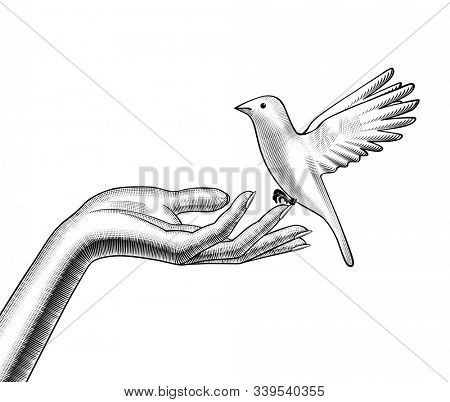 Female hands release a white bird. Vintage engraving stylized drawing.