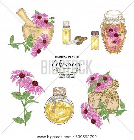Echinacea Purpurea Plant. Flowers Of Echinacea With Bottles, Jar, Mortar And Bag Set. Medical Hebs C