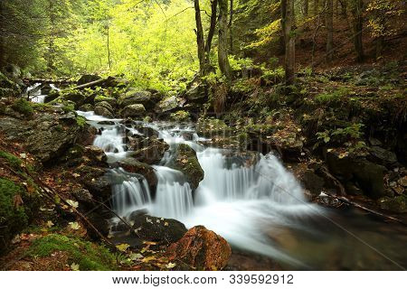 Forest stream Nature background Forest stream river Nature background Forest stream brook Nature background autumn deciduous trees water Nature background foliage leaves waterfall Nature background Natural environment Nature background. Nature background.