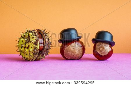 Horse Chestnut Buckeye Seeds And Closed Fruit Aesculus Hippocastanumon On Brown Violet Background. A