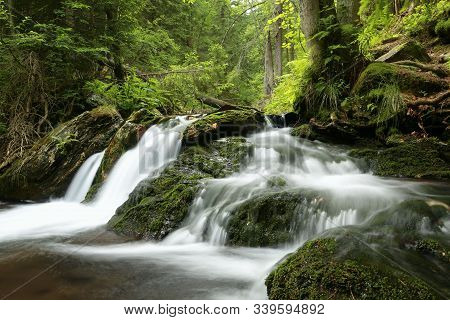 Forest stream Nature background Forest stream river natural Nature background jungle brook Nature background green deciduous trees water creek stone Nature background foliage leaves waterfall Nature background Nature background. woods Nature background.