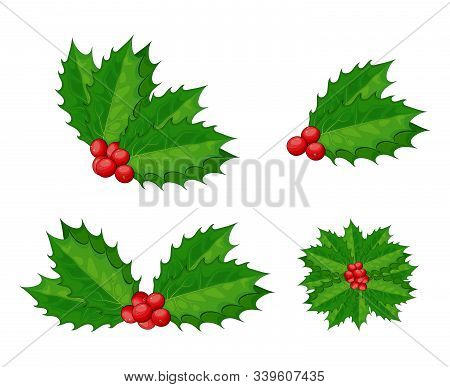 Christmas Holly Berry Vector Set For Xmas Composition. Decorative Twigs, Bunches Of Holly With Red B