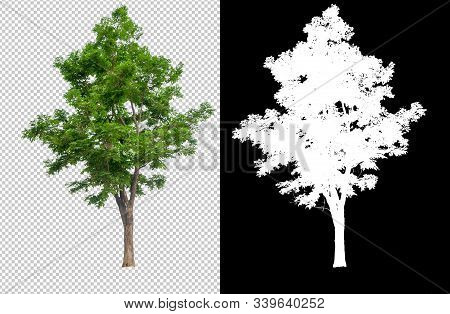 Single Tree On Transparent Picture Background With Clipping Path, Single Tree With Clipping Path And