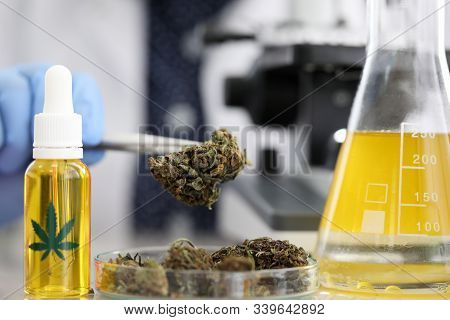 Close-up View Of Flask With Yellow Substance. Dry Hemp In Glass Container. Laboratory Worker Holding