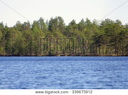 Protected Bog Area With Lakes And Trees Background In Estonia