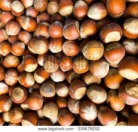 Hazelnuts. Background Made Of Nuts. Photowall-paper Organic Background.