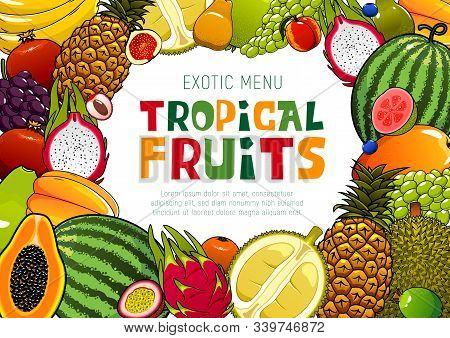 Tropical Fruits, Juicy Exotic Pineapple, Mango And Watermelon, Papaya And Guava. Vector Natural Orga