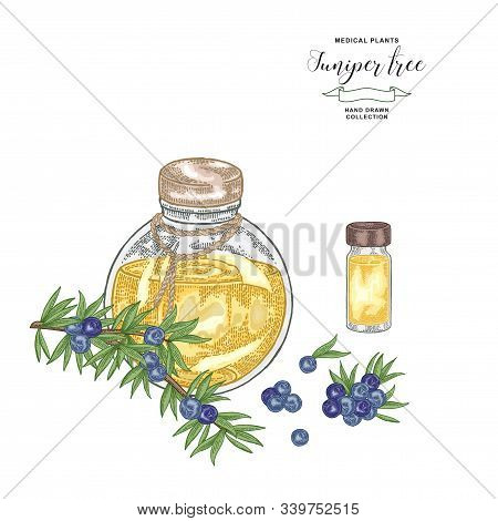 Juniper Tree Branch. Colorful Berries Of Juniper And Glass Bottle. Hand Drawn Medical Plants. Vector