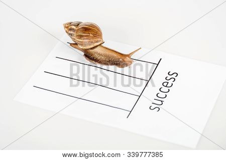 Slimy Brown Snail On White Paper With Success Lettering Isolated On White