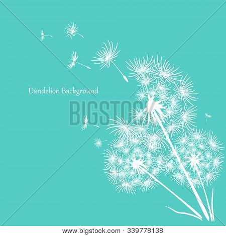 Three White Dandelions On A Blue Background. Minimalistic Background For Your Design. Flying Dandeli