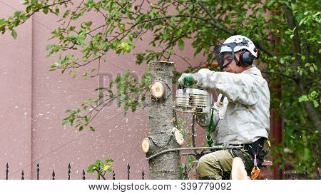 Climber On A Tree. Climber On A White Background. Arborist Man Cuts Branches With A Chainsaw And Thr