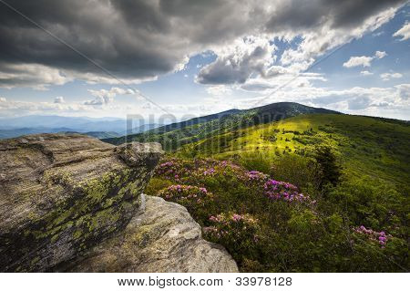 Appalachian Landscape Roan Mountain Highlands Rhododendron Flowers Nc Spring Blooms