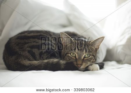 Charming Cat With A Cute Look Resting On The Couch.