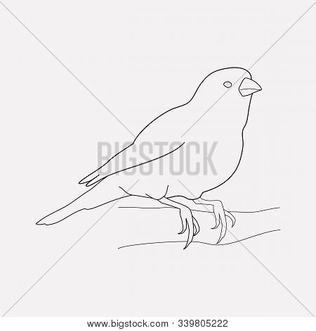Canary Icon Line Element. Vector Illustration Of Canary Icon Line Isolated On Clean Background For Y
