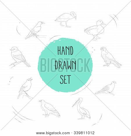 Set Of Fauna Icons Line Style Symbols With Golden Oriole, Eagle, Pelican And Other Icons For Your We
