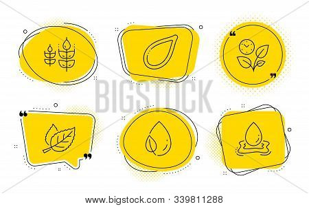Leaf Dew, Gluten Free And Water Splash Signs. Chat Bubbles. Leaf, Leaves And Pumpkin Seed Line Icons