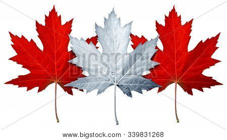 Canada Maple Leaf As White And Red Leaves As A Canadian Culture Or Natural Symbol For Canadians Isol