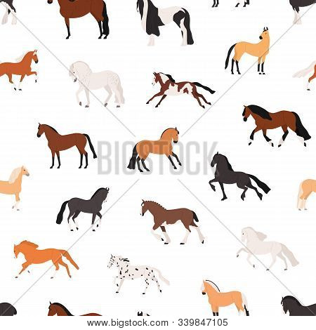 Horse Breeding Flat Vector Seamless Pattern. Purebreed Mares And Stallions Decorative Texture. Thoro