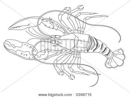 Lobster.Eps