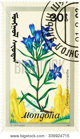 Moscow, Russia - December 13, 2019: Stamp Printed In Mongolia Shows Flowers Gentiana Pneumonanthe, S