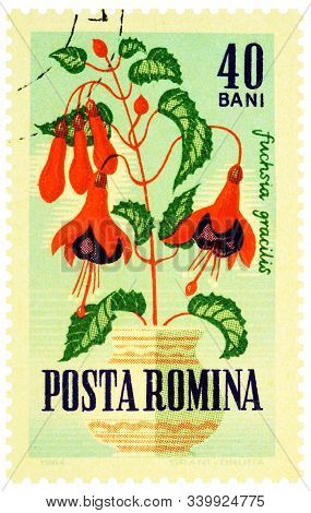Moscow, Russia - December 16, 2019: Stamp Printed In Romania Shows Hummingbird Fuchsia Or Hardy Fuch