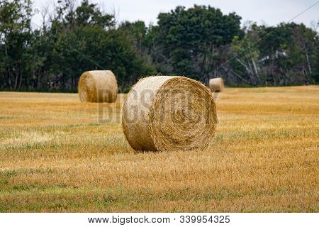 Round Hay Bales On Farmers Field On Prairie