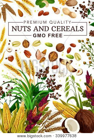 Nuts And Cereal Grains, Natural Organic Gmo Free Raw Food Nutrition. Vector Healthy Vegan Superfood