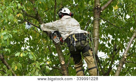 A Worker With A Helmet Works At A Height In The Trees. Climber On A White Background. Arborist Man C