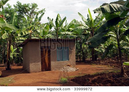 Shack In Banana Plantations