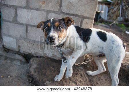 Cão sobre o retrato de cadeia