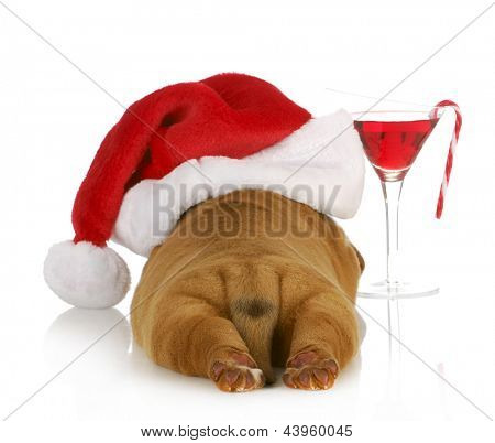 christmas puppy - dogue de bordeaux puppy wearing santa hat laying beside christmas cocktail isolated on white background poster
