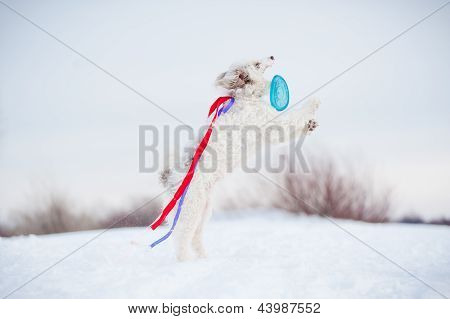 funny curly dog running fast and colored ribbons fluttering in the wind poster