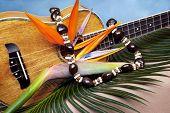 Still life of Hawaiian koa wood ukulele with fresh bird of paradise flower and kukuinut lei on blue backgound poster