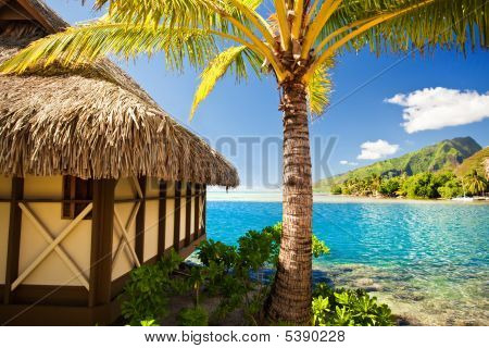 Tropical Bungalow And Palm Tree Next To Blue Lagoon
