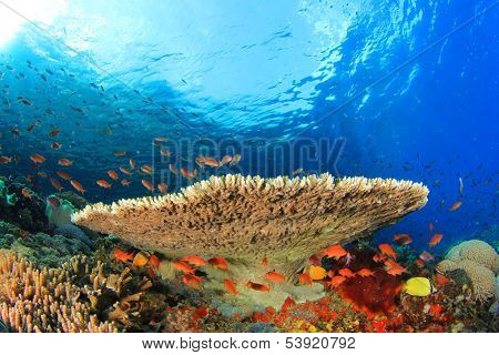 Coral Reef and Tropical fish underwater