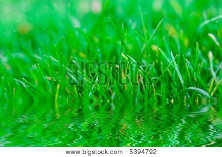 Grass Reflection In Water
