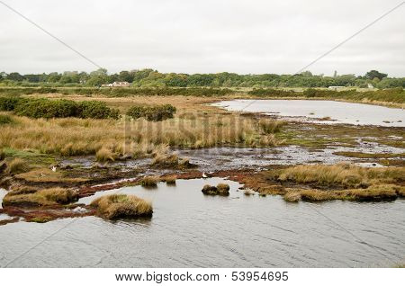 Salt Marsh, Keyhaven Reserve, Hampshire