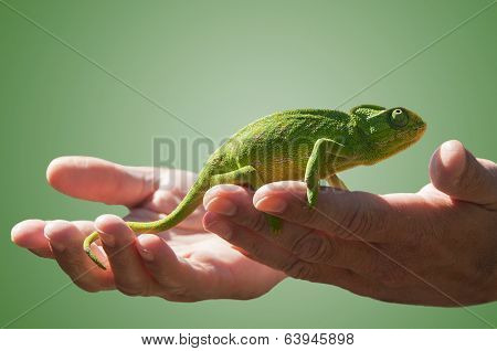 Chameleon and hands