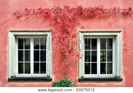 The Red Creeper Plant on the Wall
