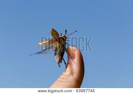 Maybug Crawl Human Finger Tip  Antennas