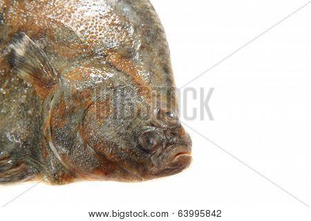 Flatfish Head Isolated