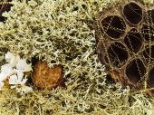 abstract background from natural materials and lichen poster