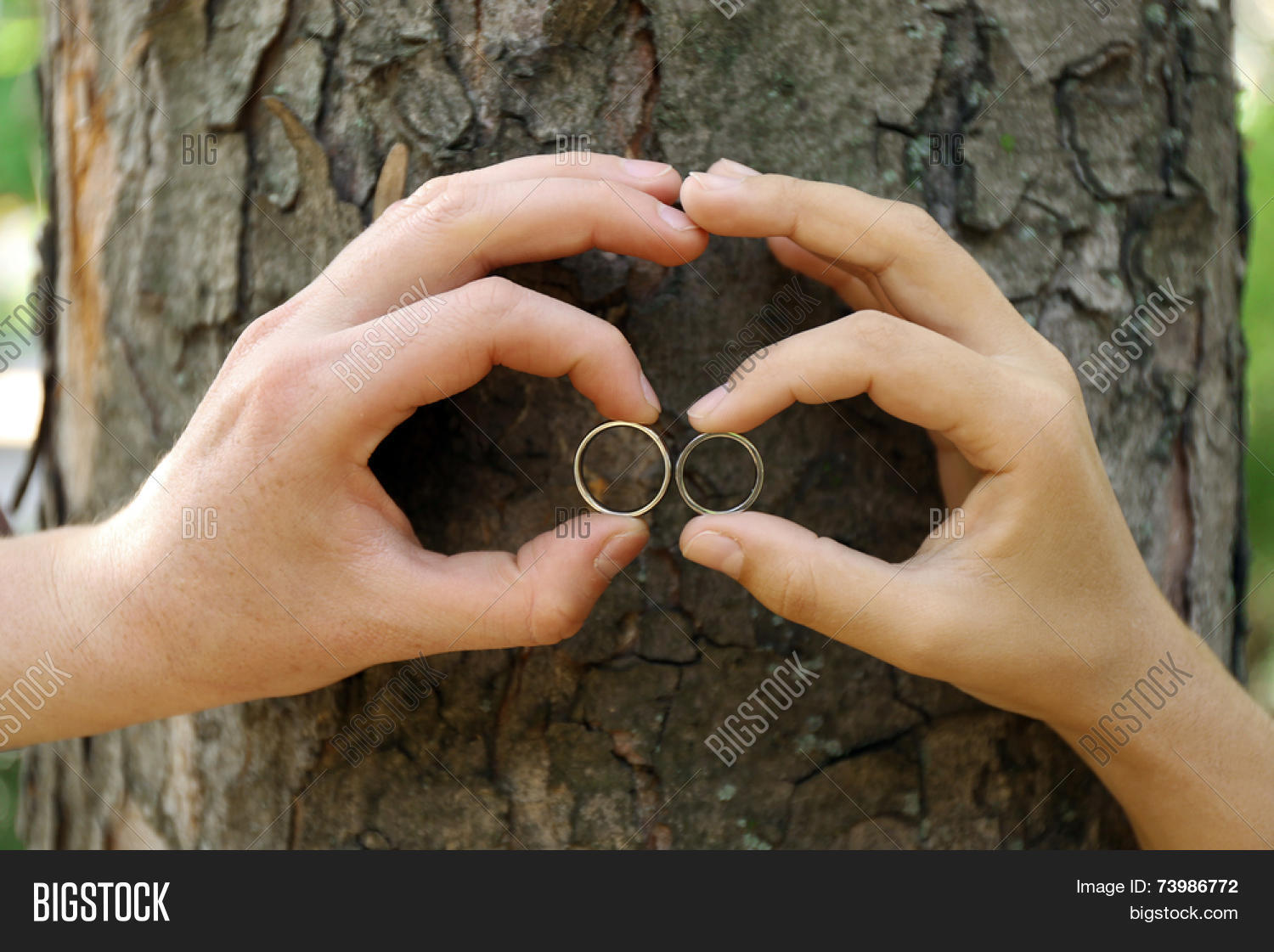 Two Hands With Wedding Rings Hugging Trunk Large Tree Close Up