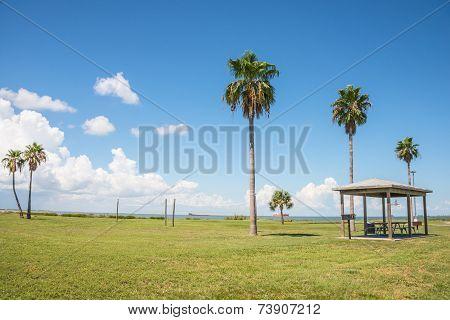 Park On Beach with Palm Trees