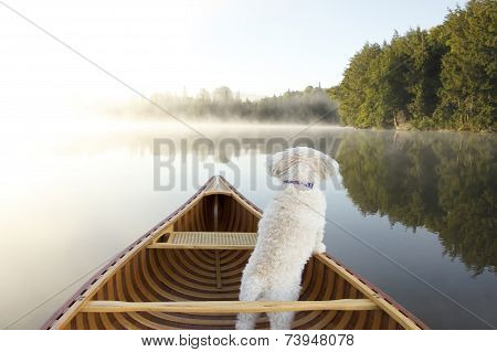 Dog Navigating From The Bow Of A Canoe