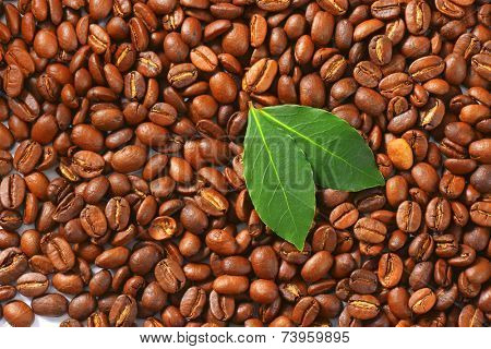 full frame picture with roasted coffee beans decorated with two green leaves poster